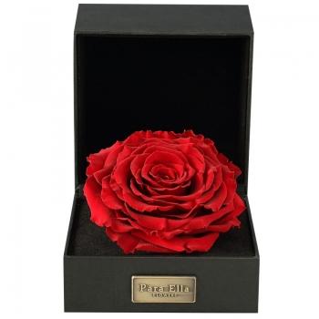Para Ella 进口玫瑰永生花礼盒之天长地久